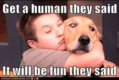 Get a human they said! Golden Retriever jokes