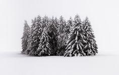 Wald #43 by HeikoGerlicher