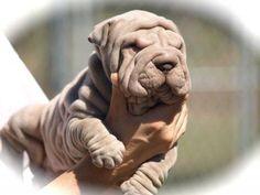Happy puppy day, this photo is shared by my fb friend Julie Hill Wilson #happy #puppyday #JulieHillWilson