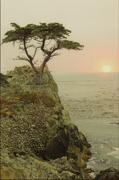Lone Cypress (Pebble Beach, CA)