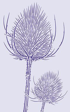 1 sheet intricate stencil The stunning Wild Teasels Stencil is a delicately cut, intricate design, with each teasel spike creating theperfectly formed elegant thistle-like heads, on two separate stalks. Use this exquisite stencil for sophisticated contemporary design notes in living spaces, halls,