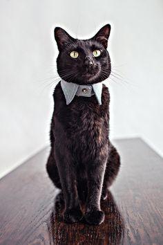 The Seersucker Cat Collar
