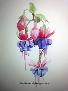 watercolor paintings of fuchsia | fuchsia watercolor sketch by hainexjnh traditional art paintings still ...