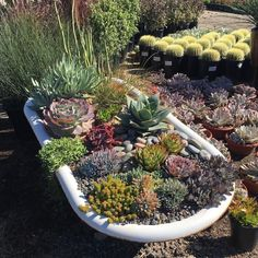 If you want to make Spring & Summer Garden Succulent Plants are the best choice. Succulents multiply easily, and you don't need to visit the nursery again to find other plants for yourself. Succulents are far more tolerant of cold than many people expect. Succulents In Containers, Planting Succulents, Planting Flowers, Succulent Plants, Succulent Landscaping, Backyard Landscaping, Landscaping Ideas, Amazing Gardens, Beautiful Gardens