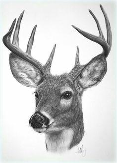 Pencil Drawings Drawing of a White-tailed Deer - fine art print - Hirsch Illustration, Drawing Sketches, Art Drawings, Drawing Ideas, Sketching, Deer Sketch, Deer Tattoo, Deer Art, Wildlife Art