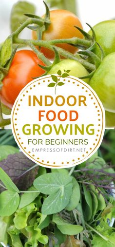 Organic Gardening Ideas Indoor Kitchen Gardening: Turn your home into a year-round vegetable garden - Excellent resource for growing veggies and herbs indoors all year round.