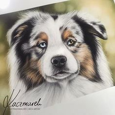 Dog Drawings, Animal Drawings, Pencil Drawings, Aussie Dogs, Draw Animals, String Art, Dog Art, Border Collie, Husky