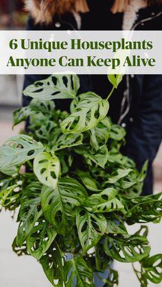 Best Indoor Plants, Outdoor Plants, Garden Plants, Indoor Garden, Outdoor Gardens, Home And Garden, Indoor House Plants, Indoor Hanging Plants, Easy House Plants