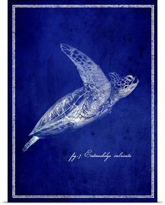 Marine Collection II - Sea Turtle