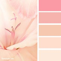 Red and pink, peach color palette Palette Deco, Pink Palette, Pastel Colour Palette, Colour Pallette, Color Palate, Pastel Colors, Color Schemes Colour Palettes, Peach Color Palettes, Color Combos