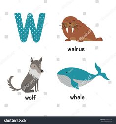 Cute Animal Zoo Alphabet. Letter W for wolf, whale, walrus