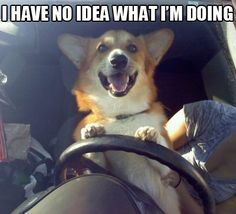 I finally get to drive and..........discovered my legs were to short to reach the pedals! lol