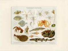 Just listed for sale in my shop! Antique diagram of ocean life: fish, crab, shrimp, eel, stingray printed Vintage Art Prints, Antique Prints, Stingray Fish, Life Under The Sea, Fish Art, Summer Art, Ocean Beach, Marine Life, Shrimp