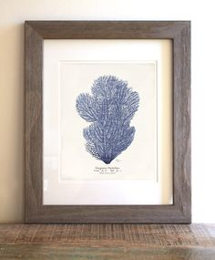 Antique Blue Coral Art Print  8 x 10  Natural by 1001treasures, $14.00