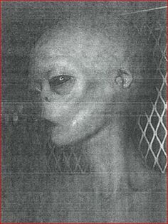 Pictures From Area 51 Alien | ... IS REAL PHOTO OF AN ALIEN NAMED J-ROD KEPT AT AREA 51...DETAILS BELOW