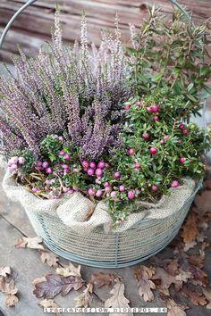 Garten Flow - Beautiful Garden views inside and out! Container Flowers, Container Plants, Container Gardening, Fall Containers, Balcony Plants, Fall Planters, Most Beautiful Gardens, Autumn Garden, Plantation