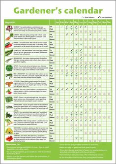 A3 novice gardener's/beginner's vegetable growing gardening calendar