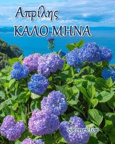 New Month Greetings, Greek Quotes, Greece, In This Moment, Seasons, Plants, Thursday, Art, Pictures