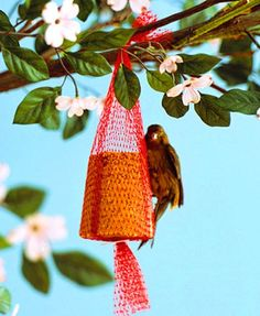 Make your own bird food mixture, then reuse an old fruit mesh bag to hang it on a tree.