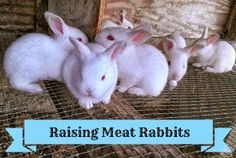 Homegrown on the Hill: Raising Meat Rabbits