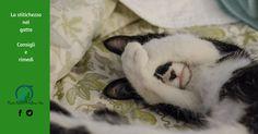 La stitichezza nel gatto, i lassativi e i consigli da attuare nella vita quotidiana, no al fai da te, se notate questi sintomi