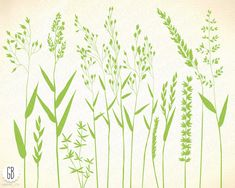 Grasses, wild herbs, wildflowers, plants, flora, botanical, bent grass, vector silhouette F