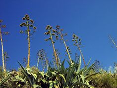 Dryness Photography Photos, Explore, Plants, Plant, Planets, Exploring