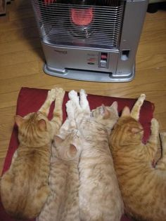 Cats and the heater #Funny #Cats