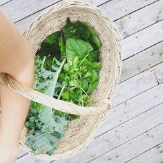 Kale, Parsley & Malabar Spinach from our Niagara Garden