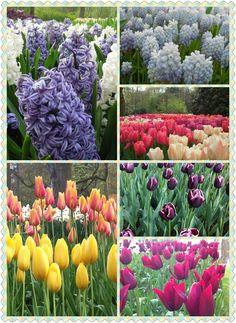 Keukenhof Tulip Garden, closing in one week. Don't miss out!