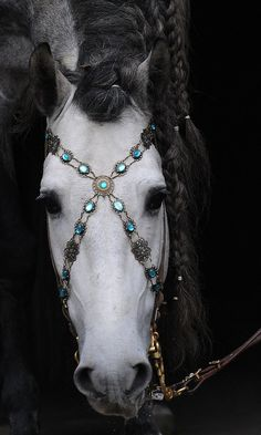 Show Bridle-Baroque Bridle turquoise black leather by Prunkpferd