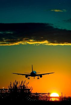 Taking Flight.