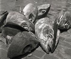 "La mattanza - La tonnara (The Slaughter - The tuna), Favignana, Sicily, Italy (1951.) / Cicle: ""Tuna catch"" Photo by Herbert List Herbert List, Matt Hardy, Best Black, Black And White, Photographer Portfolio, Famous Photographers, Modern Photography, Magnum Photos, Photo Essay"