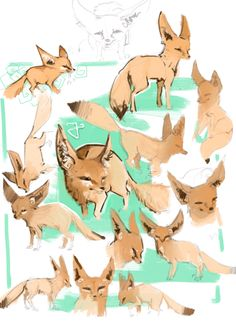 Fennec fox practice, absolutely adore them! They look like my dog Bajka!