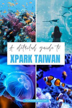A Detailed Guide to Xpark Aquarium, Taiwan | Hoponworld Taiwan Travel, Us Travel, Pedestrian Bridge, Weird Creatures, Colorful Fish, Scary Movies, Buy Tickets, Taipei, Travel Guides