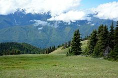 View of the Olympic Mountain Range from Hurricane Ridge, Olympic National Park