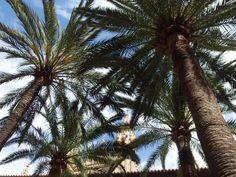 Palmu  palm tree Palm Trees, Nature, Plants, Palm Plants, Naturaleza, Plant, Nature Illustration, Off Grid, Planets
