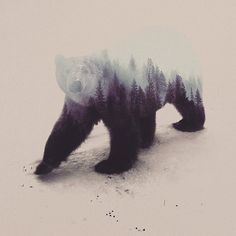 Animales en su habitat - Andreas Lie. #art #bear #doubleexposure