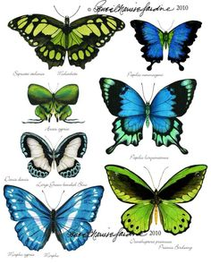 Items similar to Butterfly Study - Blue Green Hand Signed Glicee Print on Etsy Butterfly Clip Art, Butterfly Images, Butterfly Drawing, Butterfly Crafts, Green Butterfly, Butterfly Artwork, Names Of Butterflies, Beautiful Butterflies, Vintage Clock Tattoos