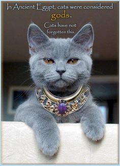In Ancient Egypt Cat were considered Gods Blue Cats, Grey Cats, Grey Kitten, I Love Cats, Cool Cats, Beautiful Cats, Animals Beautiful, Gorgeous Gorgeous, Absolutely Stunning