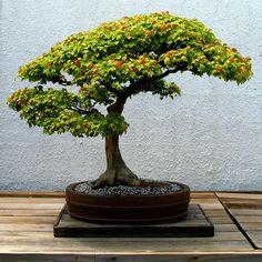 ~~swept | bonsai by the monk~~