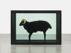 74463966b4d7 Damien Hirst, Black Sheep with Golden Horns (2009) on view Gagosian Gallery  at Frieze NY.
