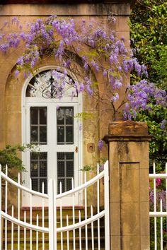 hueandeyephotography:  Wisteria Vine and Door, Charleston, SC © Doug Hickok All Rights Reserved More here… hue and eye