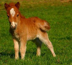 Pony...a cute little guy!