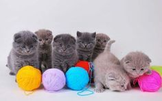 Cute Kittens Playing with Yarn Cute Kittens, Kittens Playing, Cats And Kittens, Small Kittens, Beautiful Kittens, Fluffy Kittens, Cool Cats, I Love Cats, Funny Cats
