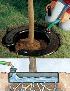 Water Ring - good for transplanted trees and shrubs