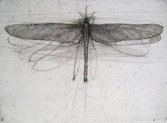 "bluecrowcafe: "" iamjapanese: "" Lanfranco Quadrio(Italian, b.1966) "" 'Libellula' Lanfranco Quadrio, Italian engraver and draughtsman """