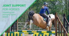 Learn about preventing, supporting and managing equine arthritis. How can you help prevent arthritis? How can you support and manage equine arthritis so that you can provide your horse with nutritional strategies which will create healthy resilient joints capable of a long working life. Free article to help you be the best horse owner you can be.