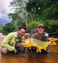 Golden dorado fishin