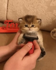 Baby kittens g Kittens And Puppies, Cute Cats And Kittens, Baby Cats, I Love Cats, Kittens Cutest, Cute Funny Animals, Cute Baby Animals, Animals And Pets, Funny Cats